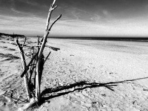 Trockenes Holz am Strand